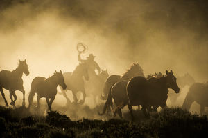 A wrangler herding horses through backlit dustcloud in golden light of sunrise