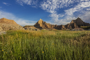 Yellow coneflowers in Badlands National Park, South Dakota, USA