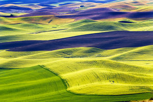 Yellow Green Wheat Fields Black Dirt Fallow Land from Steptoe Butte at Palouse Washington