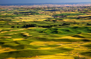Yellow Green Wheat Fields Roads and Farms from Steptoe Butte at Palouse Washington
