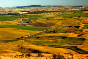 Yellow Green Wheat Fields Roads and Red Farms from Steptoe Butte at Palouse Washington
